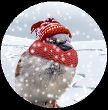 bird-in-the-snow